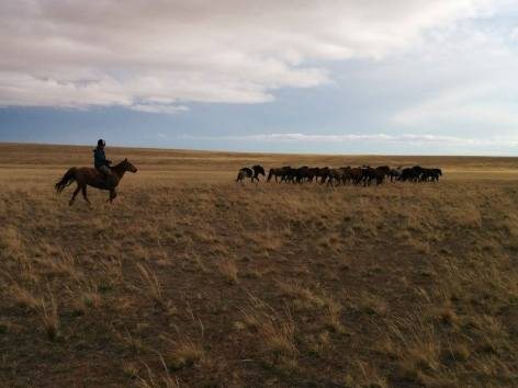 Herding the horses over the steppe [photo credit Ouyang Xin (Ox)].