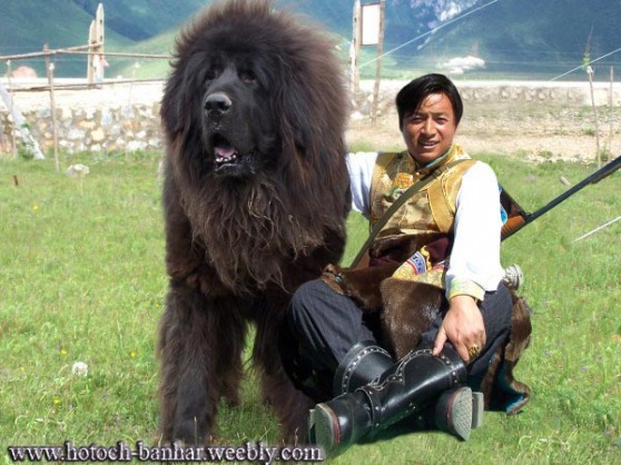 A Mongolian dog (as depicted by the internet).